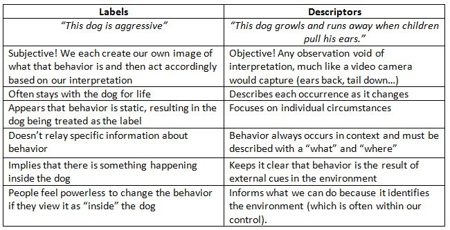 This Dog Is – Animal Behavior Worksheet