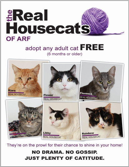 Cat Adoption Shelters Near Me