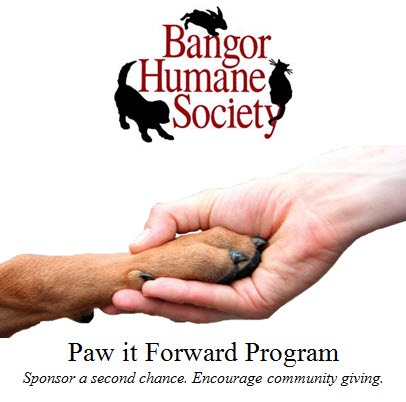 androscoggin humane society essays Free humane papers, essays, and research papers my account taking a brief look the humane society - humane society the humane society is a.