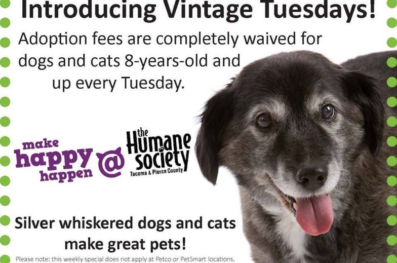 senior black and white dog on adoption promo poster