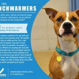 promo for dog adopton from wisconsin humane featuring brown and white pit mix