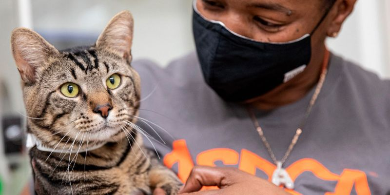woman in aspca tee holding cat's paw gently