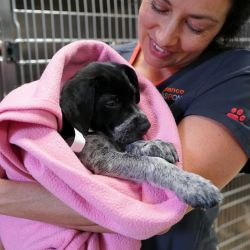 doctor bayer holding puppy in pink blanket