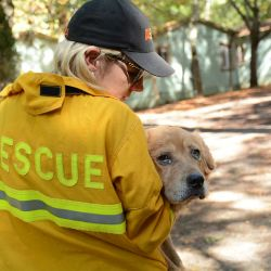 woman in yellow rescue jacket holding dog in her arms