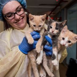 woman wearing protective gear holding two kittens