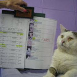 cat looking at clipboard