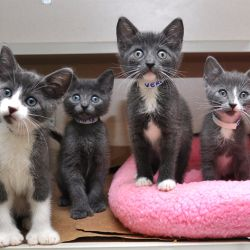 four grey kittens inside a cage looking at camera