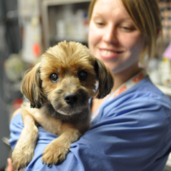 woman in scrubs holding puppy in medical setting
