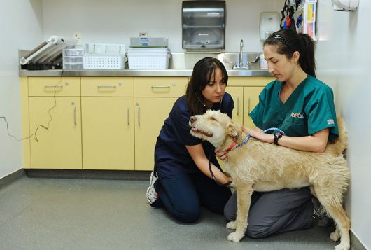 dog having exam with stethoscope