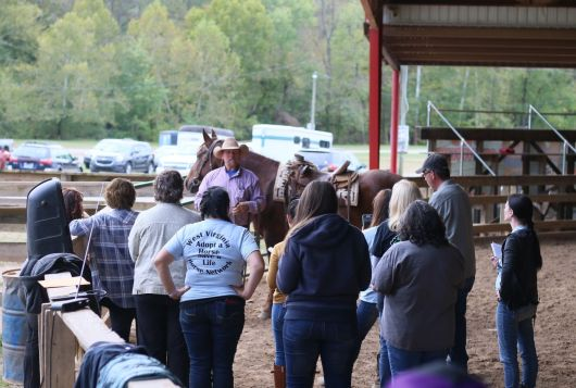mike hurst training people and equines