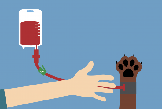 Illustration from autotransfusion guide