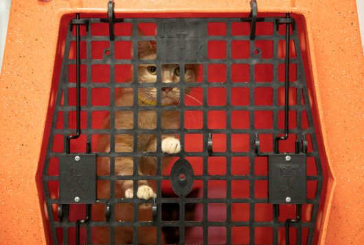 cat in transport cage