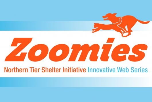 zoomies square orange and blue logo
