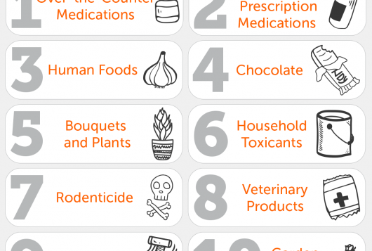 orange and gray list of top animal toxins for 2020