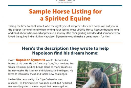 screenshot of the sample horse listing download
