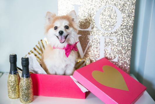 small white dog in pink gift box smiling