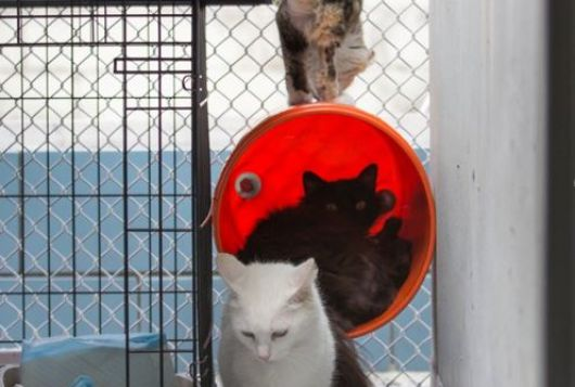cats in cages hiding in bucket