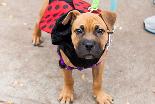 dog wearing ladybug costume
