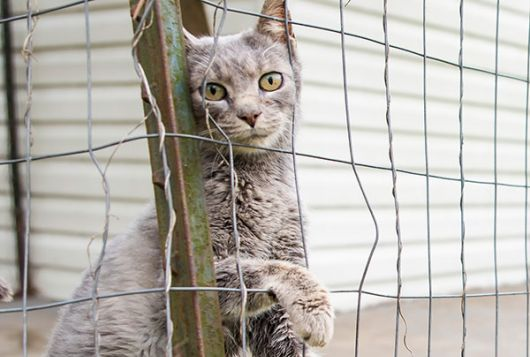 Cat behind a wire fence