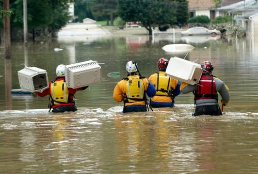 rescue workers treading deep water carrying animal crates during flooding