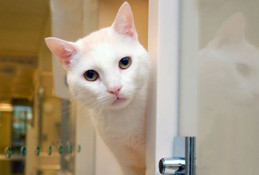 white cat peeks out of enclosure