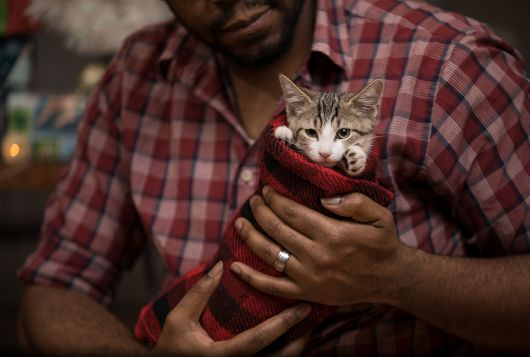 kitten in christmas stocking held by adopter