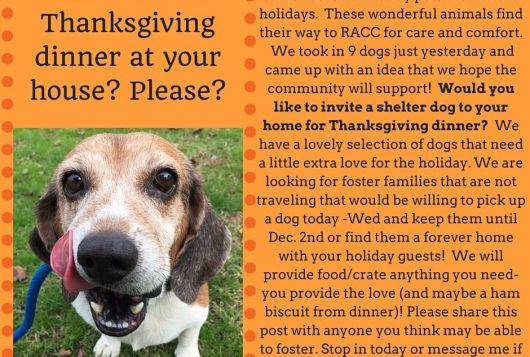 senior beagle licking her chops in thanksgiving visit shelter promo flyer