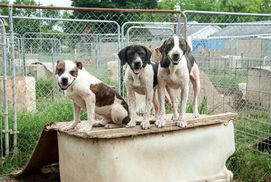 three dogs standing on structure in bad condition