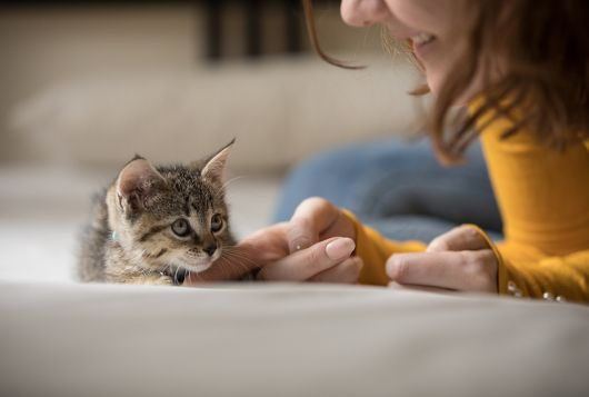 kitten on bed with woman petting her