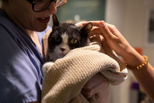 cat wrapped in blanket held by veterinary staff