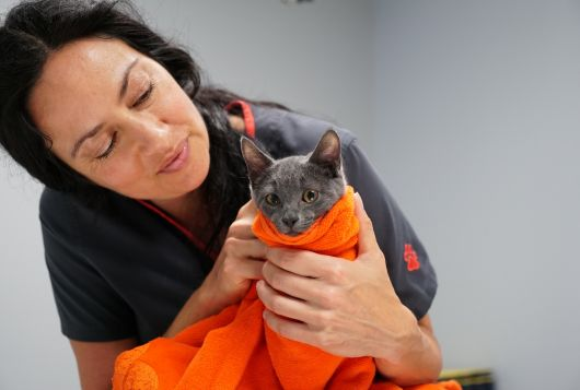 Woman wrapping towel around cat