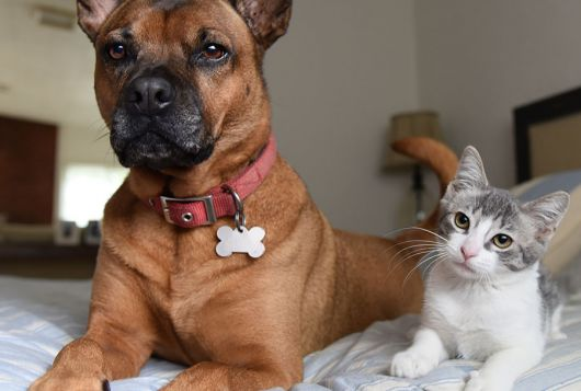 dog and cat on bed looking at camera