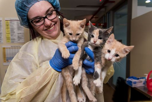 three kittens held by smiling vet