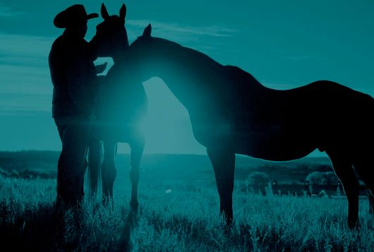 man in cowboy hat standing with two horses in blue colored photo
