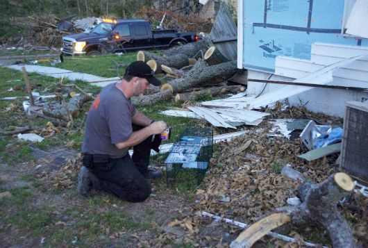 man sets out trap amid wreckage from disaster