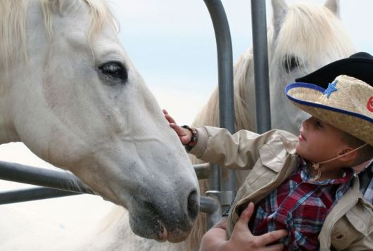young girl pets a white horse