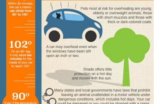 infographic about the dangers of leaving animals in hot cars