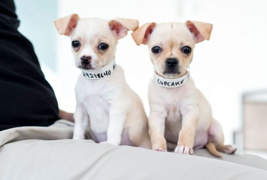 two tiny puppies ready for adoption