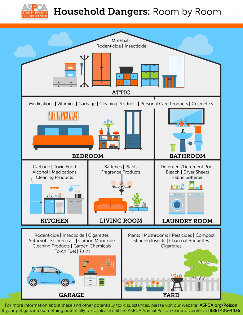 household toxins infographic