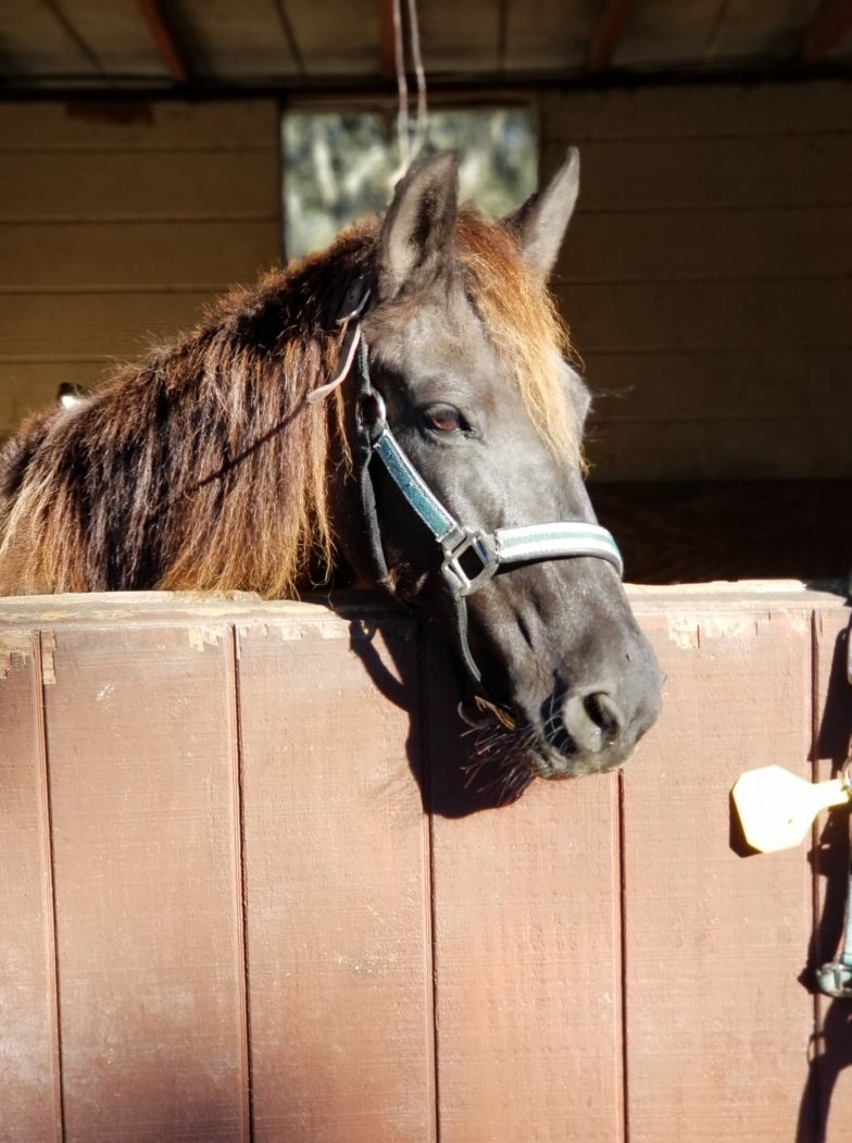 horse in sunlight in stable