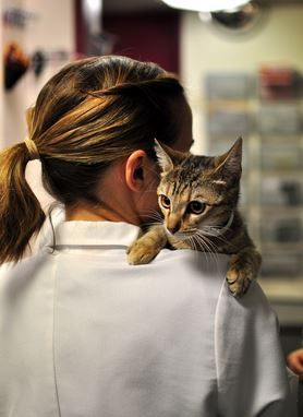 Most Common Causes Of Toxin Seizures In Cats Aspcapro