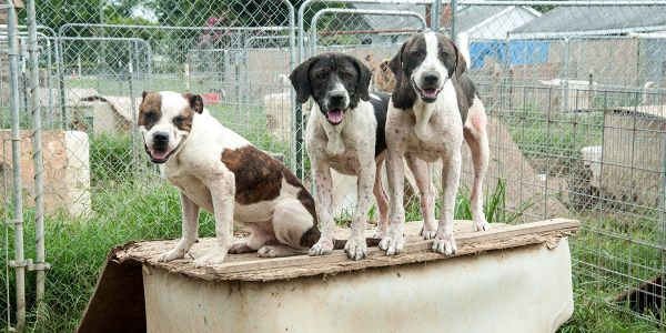 8 Tips for Reporting Animal Cruelty | ASPCApro