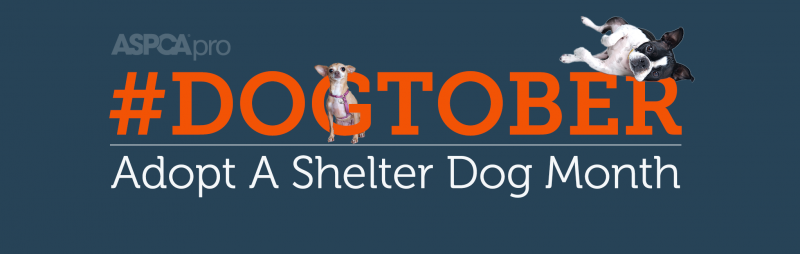 dogtober hashtag with two small dogs peeking through letters adopt a shelter dog