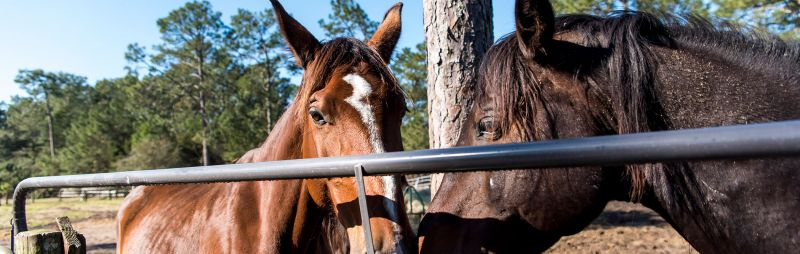 two horses in sunshine at retaining fence